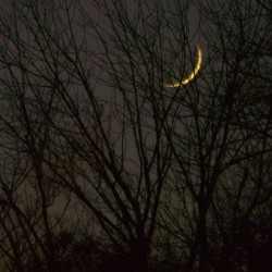 Crescent moon hiding in trees