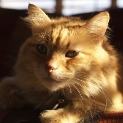 Leo the sunshine cat